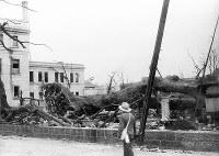 (10)被爆して倒れた国泰寺のクスノキ。左奥は日本銀行広島支店、そのすぐ右側に山陽記念館の屋根の一部が見える(爆心地から500メートル)=広島市小町(現広島市中区小町)で1945年8月9日、広島平和記念資料館(原爆資料館)検証