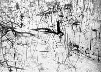 (14)茎だけが残る広島城の堀のハス(爆心地から980メートル)=現広島市中区基町で1945年8月9日、広島平和記念資料館(原爆資料館)検証