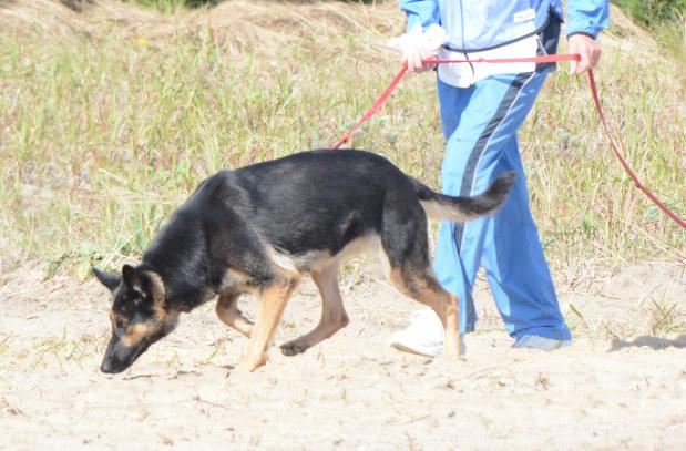 直轄警察犬:県警、初導入 初動捜査に期待 警視庁から「マリー」譲渡 ...