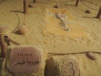 ワディ・アル・ヒタンで展示されている哺乳類の祖先の化石=秋山信一撮影