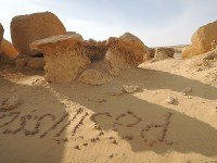 ワディ・アル・ヒタンにあるマングローブの化石=秋山信一撮影