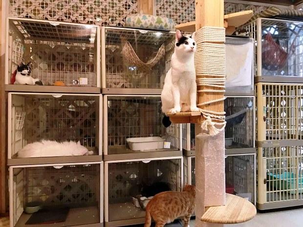 カフェ 保護 猫