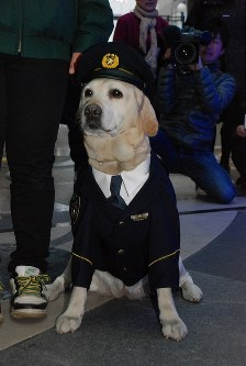 警部用の制服で振り込め詐欺防止キャンペーンに登場したきな子=2010年12月15日午後4時32分、中村好見撮影
