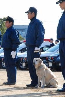 香川県警の嘱託警察犬「きな子」=2011年1月6日午前11時52分、中村好見撮影