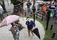 桜の開花宣言を出すため、靖国神社にある標本木に咲いた桜の花を観測する気象庁の職員ら=東京都千代田区で2017年3月21日午前10時11分、宮武祐希撮影