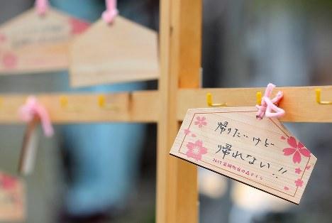 夜の森の桜並木の下にかけられた絵馬。地元住民らの思いが書かれていた=福島県富岡町で2017年4月8日午前11時24分、喜屋武真之介撮影