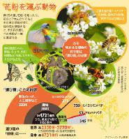 花粉を運ぶ動物