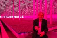 ピンク色のLED照明で栽培されたハーブ生産工場を説明するコッパート・クレス社のロブ・バーン社長=オランダ西部のウェストラントで
