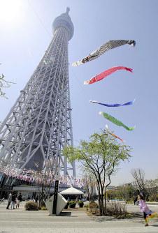東京スカイツリーの鯉のぼり