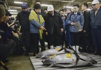 今年1月、築地市場を訪れた小池知事。競りの様子などを観察し業者らの声に耳を傾けた。市場関係者からは「早く決断してほしい」との声が上がる=東京都中央区で1月12日、猪飼健史撮影