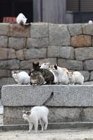 たくさんの仲間とともに=香川県多度津町で2017年3月13日、望月亮一撮影