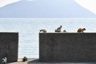 防波堤で思い思いに=香川県多度津町で2017年3月13日、望月亮一撮影
