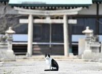 カメラを向けると姿勢を正した=香川県多度津町で2017年3月13日、望月亮一撮影