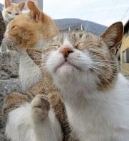佐柳島の猫たち=香川県多度津町で2017年3月13日、望月亮一撮影