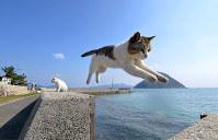 自由気ままな佐柳島の猫たち=香川県多度津町で、望月亮一撮影