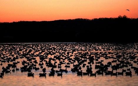 Photo Journal: Avian evening
