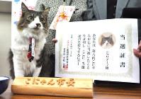 第6代こにゃん市長に当選したジュリアーノ=湖南市役所で2016年4月26日午後0時1分、村瀬優子撮影