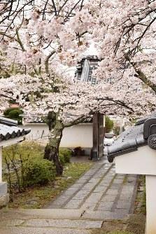 福聚寺の山門からの石畳は、さながら桜のトンネル=福島県三春町で2017年4月18日、小林祥晃撮影