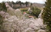 高台から見渡した三春町の風景。「桜の里」という言葉がふさわしい=福島県三春町で2017年4月18日、小林祥晃撮影