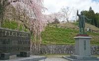 明治時代の三春町は福島県の自由民権運動の拠点でもあった。運動を率いた河野広中(元衆院議長)像のそばには、大きなシダレザクラが花を咲かせていた=2017年4月18日、小林祥晃撮影