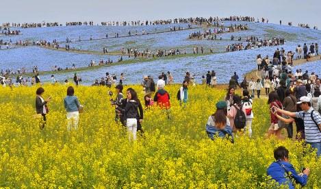 Photo Journal: Floral fest