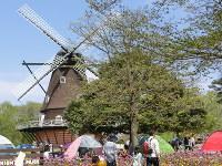 公園のシンボルはデンマーク風車。家族連れがテントを張って楽しむ姿も見られる=ふなばしアンデルセン公園で