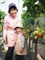 大粒のイチゴが大好物という、孫のひなたちゃんと