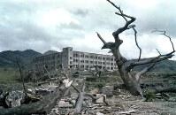 爆風と熱線のために裂けたセンダンの巨木と山里国民学校(現・山里小学校)。被爆後、学校のそばに木造の家が建っているのが見える=長崎市で1945~46年ごろ撮影・米国立公文書館所蔵
