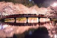 弘前公園の春陽橋からライトアップされた夜桜を楽しむ人たち=青森県弘前市で2017年4月28日午後8時45分、北山夏帆撮影