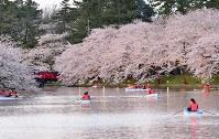 弘前公園の西堀で、ボートから満開の桜を楽しむ人たち=青森県弘前市で2017年4月27日午後6時24分、北山夏帆撮影