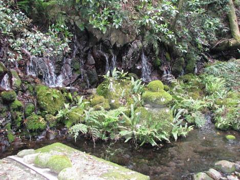 寒川水源で地肌からしみ出てくる清水