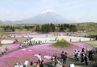 色とりどりの花が咲く「富士芝桜まつり」の会場=山梨県富士河口湖町で、奥村隆撮影