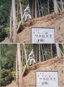 One of the photos that a subcontractor submitted to the city shows a worker carrying a cut bamboo tree. This photo was used multiple times in work reports to make it appear as if the scene was from several different decontamination work sites. (Photo courtesy of the Fukushima Municipal Government)