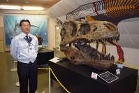 公開しているティラノサウルスの頭骨レプリカ(Courtesy of The Royal Saskachewan Museum)=むかわ町立穂別博物館で