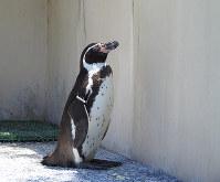 壁に向かって1羽で立ち尽くすナンテン=福家多恵子さん撮影