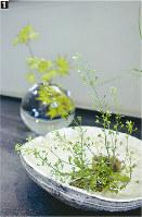 片口に生けたナズナ(手前)と、水滴のような花器に挿したカエデ=いずれも東京都中央区銀座3の「野の花司」で