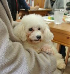 来店客に抱かれる保護犬=大阪市北区の「HOGOKEN CAFE 天神橋店」で2017年3月26日、倉田陶子撮影