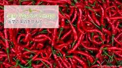 市場で山積みになって売られていたトウガラシの品種