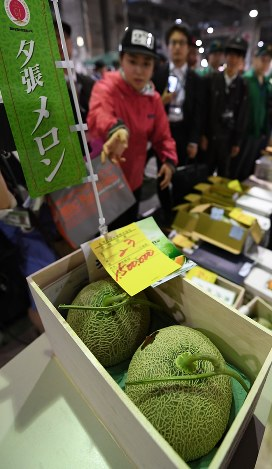 The two Yubari melons which fetched the highest bid of 1.5 million yen at the first auction of the season are shown in Sapporo's Chuo Ward on May 26, 2017. (Mainichi)