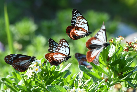 Photo Journal: Butterfly breather