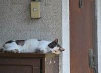 アパートの日陰で昼寝するネコ