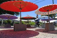 天日干しされる和傘=大分県中津市で2017年5月27日、津村豊和撮影