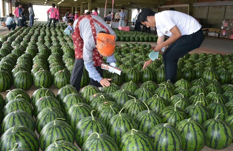ザ・作兵衛!や三浦半島の農家でメロンと大玉西瓜 …