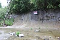 養老川の右岸の崖地にある地磁気逆転地層の「白尾火山灰層」=2017年5月28日、海老名富夫撮影