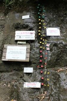地層に打ち込まれた緑、黄、赤の磁場識別くいと各種表示板=2017年5月28日、海老名富夫撮影