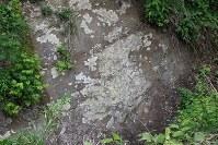 地磁気逆転地層の真裏にある支流の崖地にも無数の採取跡が見られる=2017年5月28日、海老名富夫撮影