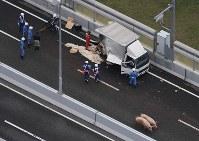 阪神高速池田線の事故で逃げ出した豚(手前右)=大阪府池田市で2017年6月8日午前11時15分、本社ヘリから三浦博之撮影