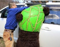 Melon Kuma has trouble getting inside a car in the city of Yubari in Hokkaido. (Mainichi)