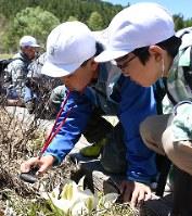 水芭蕉をルーペで観察する児童たち