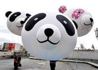 Balloons shaped like pandas are seen on the roof of the Matsuzakaya department store in Tokyo's Taito Ward on June 13, 2017. The balloons were deployed to celebrate the birth of a cub to giant panda Shin Shin at the Ueno Zoological Gardens the previous day. (Mainichi)